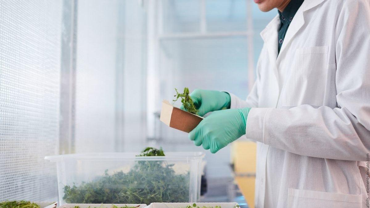 Pflanzenkunde – Pflanzen bestimmen lernen und Fachmann der Botanik werden