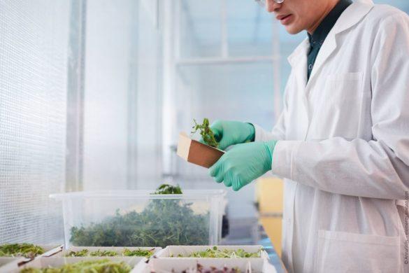 Pflanzenkunde - Pflanzen bestimmen lernen und Fachmann der Botanik werden